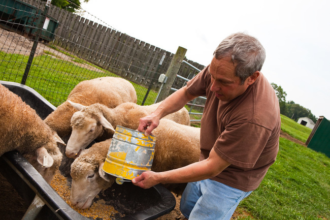 A resident at Hopewell Therapeutic Farm helps feed the sheep.